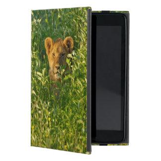 León joven (Panthera Leo) que acecha, Ngorongoro iPad Mini Cobertura
