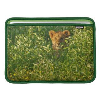 León joven (Panthera Leo) que acecha, Ngorongoro Funda Para Macbook Air