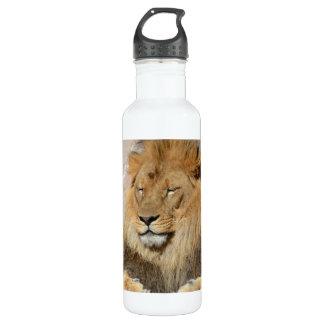 León magnífico