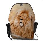 León majestuoso bolsas de mensajeria