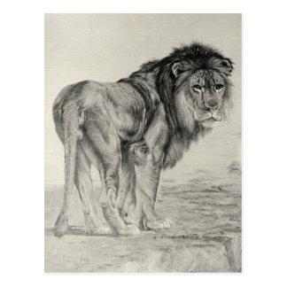 León majestuoso del vintage postales