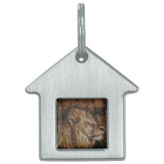 León majestuoso placa de mascota
