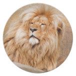 León majestuoso platos para fiestas