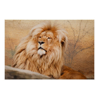 León majestuoso póster