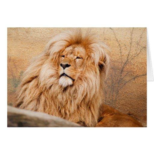 León majestuoso tarjetón