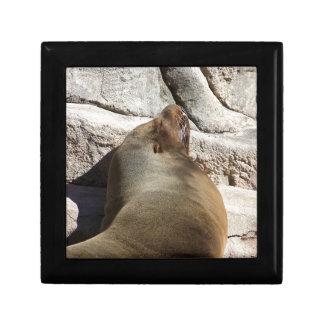 León marino caja de joyas