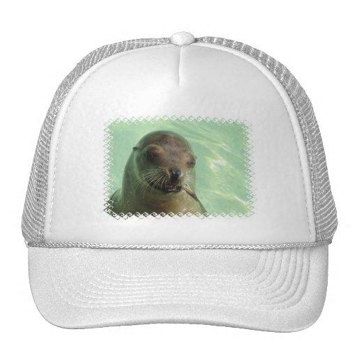 León marino con el gorra de béisbol de los pescado