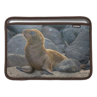 León marino de las Islas Galápagos Funda Macbook Air