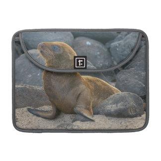 León marino de las Islas Galápagos Fundas Para Macbooks