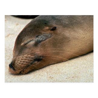 León marino de las Islas Galápagos Postal