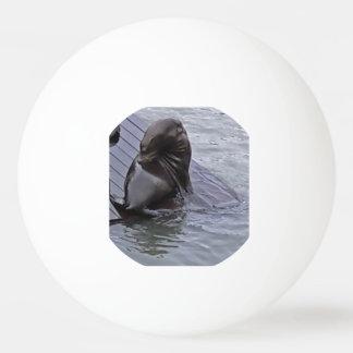 León marino de San Francisco Pelota De Ping Pong