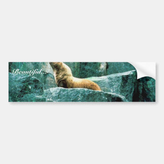 León marino de Steller Etiqueta De Parachoque
