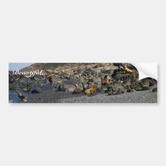 León marino de Steller Pegatina De Parachoque