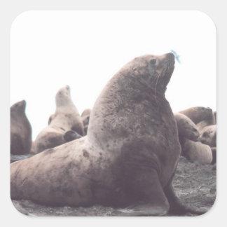León marino de Steller Colcomanias Cuadradas