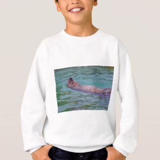 León marino de Steller en agua Playera