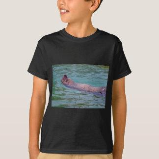 León marino de Steller en agua Polera