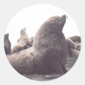 León marino de Steller Pegatina Redonda
