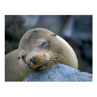 León marino del bebé, islas de las Islas Galápagos Postal