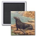 León marino del mamífero marino del vintage por la imán cuadrado