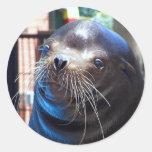 León marino dulce etiqueta redonda