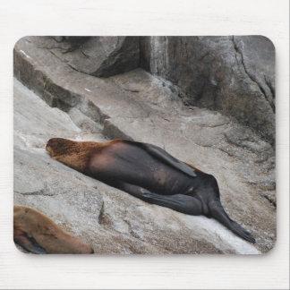 León marino el dormir tapetes de raton