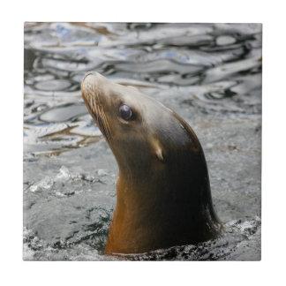 León marino en el agua - fotografía animal