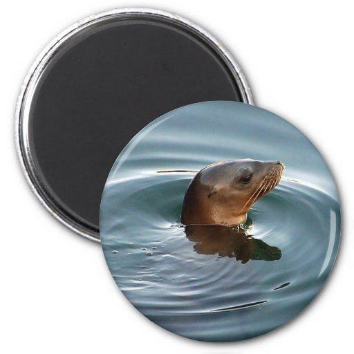 León marino en el juego imán para frigorifico