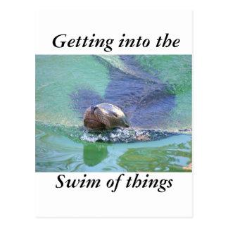 León marino; ¡En la nadada de cosas! Postal