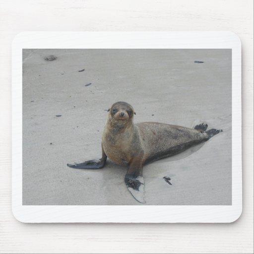 ¡León marino en las islas de las Islas Galápagos!! Tapetes De Ratón