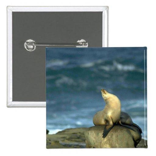 León marino en roca pin cuadrada 5 cm
