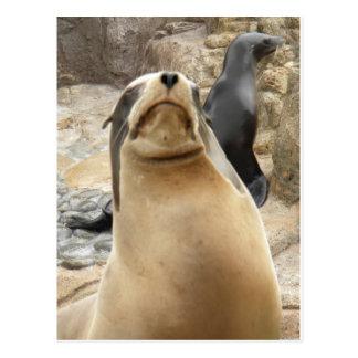 León marino gruñón postal