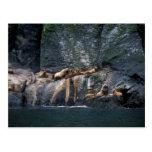 León marino Haulout de Steller en las islas Aleuti Postales