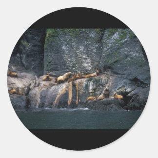 León marino Haulout de Steller en las islas Pegatina Redonda