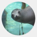 León marino hola etiqueta redonda