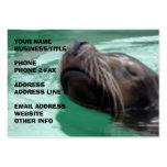 León marino lindo de la natación tarjetas de visita
