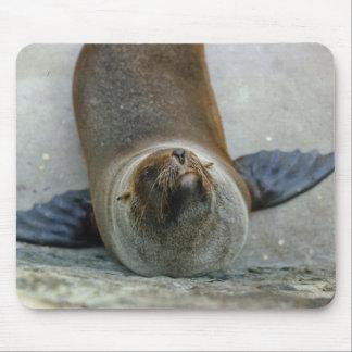 León marino Mousepad