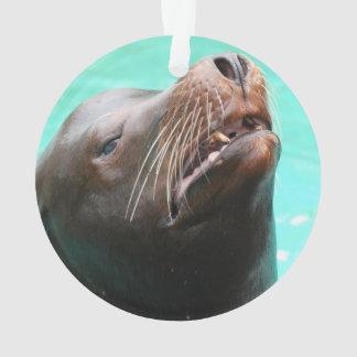 León marino Nosey