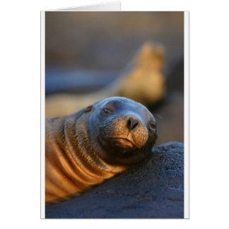 León marino perezoso tarjeta
