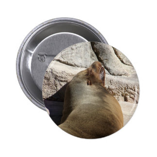 León marino pins