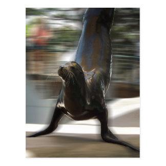 León marino que hace truco en el parque zoológico postal