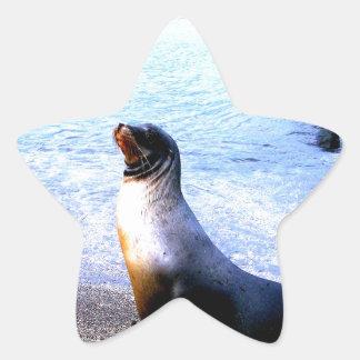 León marino que pide amor colcomania cuadrada