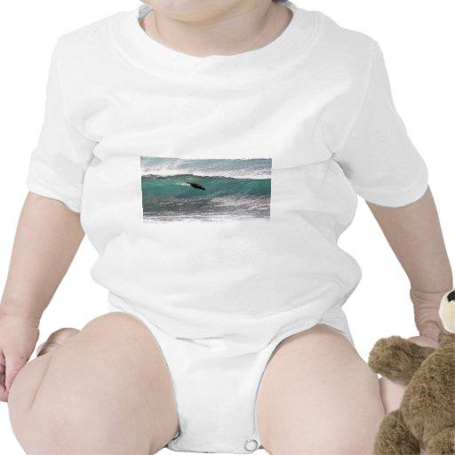 León marino que practica surf una onda, islas de l trajes de bebé