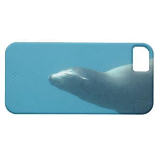 León marino subacuático iPhone 5 funda