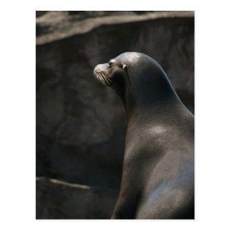 León marino tarjetas postales
