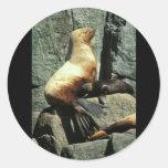 León marino y perrito de Steller Etiquetas Redondas