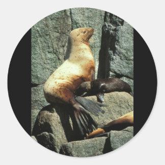 León marino y perrito de Steller Pegatina Redonda