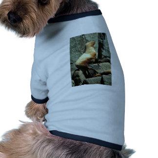 León marino y perrito de Steller Camisa De Mascota