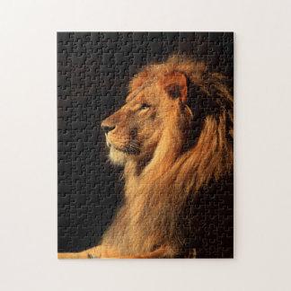 León masculino africano; Rompecabezas de la fauna