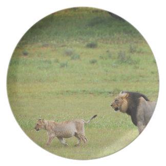 león masculino con el cachorro, Panthera leo, Plato Para Fiesta