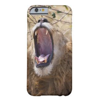 León masculino (Panthera leo) que bosteza, Masai Funda De iPhone 6 Barely There